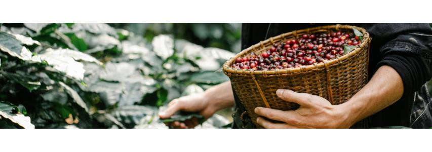 Nos cafés aromatisés